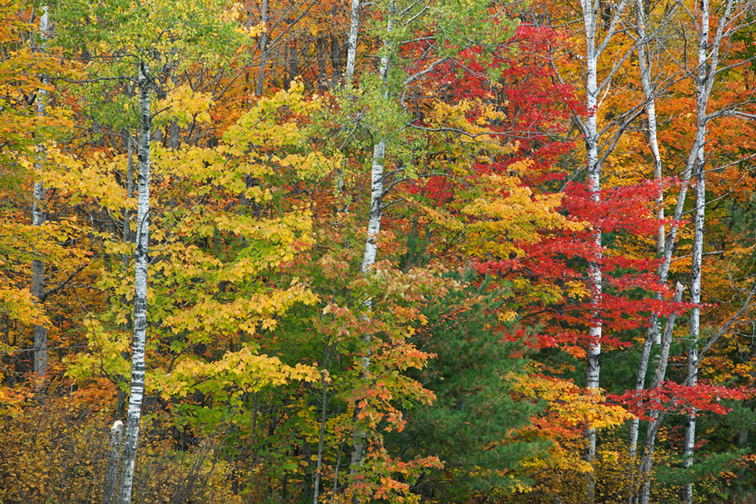 Bosque en Michigan