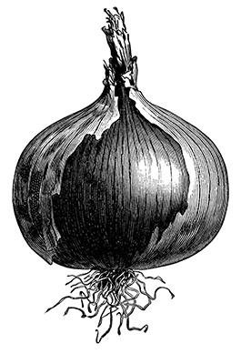 Cebolla Gigante