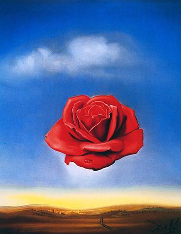 Rosa Meditativa