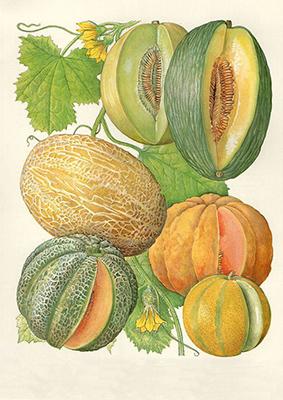 Melones Vintage