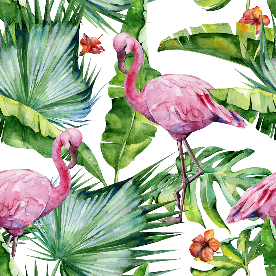 Flamencos tropical
